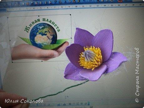 У каждого из нас есть любимое растение. Для меня это сон-трава. Необычное растение. Я всего несколько раз видела его в природе. У нас оно  очень редкое.Именно поэтому, прочитав условия конкурса, я сразу же решила, какое растение я буду делать. Когда в лесах еще лежит последний зимний снег, на оттаявшей земле местами появляются необычные цветы, похожие на маленькие тюльпаны, фиолетово-лилового цвета с желтой серединкой, пушистым стебельком и пушистыми же листьями. Иногда цветы окрашены в светло-сиреневые, желтоватые или розово-белые тона. За столь раннее, почти зимнее появление на свет этот цветок еще называют подснежником. Эти многолетние травянистые растения семейства Лютиковых распространены в Северном полушарии и насчитывают около 40 видов. Некоторые виды прострела занесены в Красную книгу.  фото 6