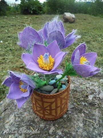 У каждого из нас есть любимое растение. Для меня это сон-трава. Необычное растение. Я всего несколько раз видела его в природе. У нас оно  очень редкое.Именно поэтому, прочитав условия конкурса, я сразу же решила, какое растение я буду делать. Когда в лесах еще лежит последний зимний снег, на оттаявшей земле местами появляются необычные цветы, похожие на маленькие тюльпаны, фиолетово-лилового цвета с желтой серединкой, пушистым стебельком и пушистыми же листьями. Иногда цветы окрашены в светло-сиреневые, желтоватые или розово-белые тона. За столь раннее, почти зимнее появление на свет этот цветок еще называют подснежником. Эти многолетние травянистые растения семейства Лютиковых распространены в Северном полушарии и насчитывают около 40 видов. Некоторые виды прострела занесены в Красную книгу.  фото 1