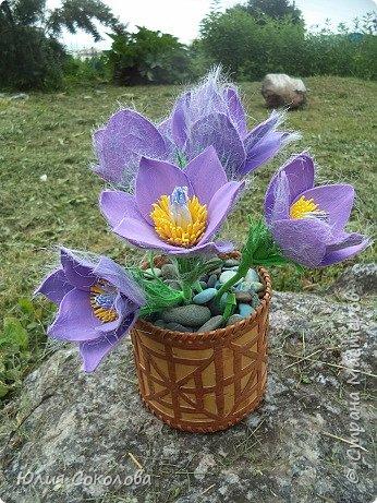 У каждого из нас есть любимое растение. Для меня это сон-трава. Необычное растение. Я всего несколько раз видела его в природе. У нас оно  очень редкое.Именно поэтому, прочитав условия конкурса, я сразу же решила, какое растение я буду делать. Когда в лесах еще лежит последний зимний снег, на оттаявшей земле местами появляются необычные цветы, похожие на маленькие тюльпаны, фиолетово-лилового цвета с желтой серединкой, пушистым стебельком и пушистыми же листьями. Иногда цветы окрашены в светло-сиреневые, желтоватые или розово-белые тона. За столь раннее, почти зимнее появление на свет этот цветок еще называют подснежником. Эти многолетние травянистые растения семейства Лютиковых распространены в Северном полушарии и насчитывают около 40 видов. Некоторые виды прострела занесены в Красную книгу.  фото 8