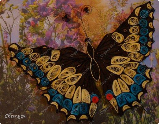 Махаон - вид бабочек, находящихся под угрозой исчезновения. У нас (в Мценском районе Орловской области) регистрируются единичные встречи на опушках леса и разнотравных лугах. Причины исчезновения - ухудшение или полное уничтожение мест обитания вследствие хозяйственной деятельности человека. Так же огромный вред наносит выжигание травы во весенних и осенних палов, уничтожающих куколок фото 7