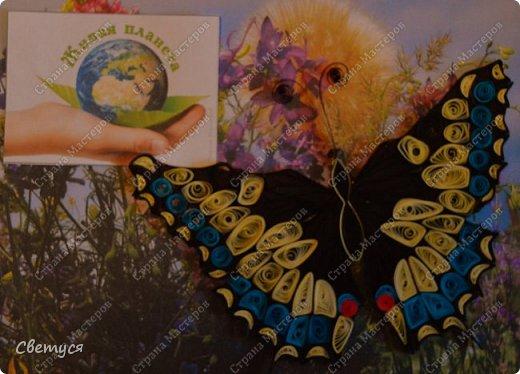 Махаон - вид бабочек, находящихся под угрозой исчезновения. У нас (в Мценском районе Орловской области) регистрируются единичные встречи на опушках леса и разнотравных лугах. Причины исчезновения - ухудшение или полное уничтожение мест обитания вследствие хозяйственной деятельности человека. Так же огромный вред наносит выжигание травы во весенних и осенних палов, уничтожающих куколок фото 6
