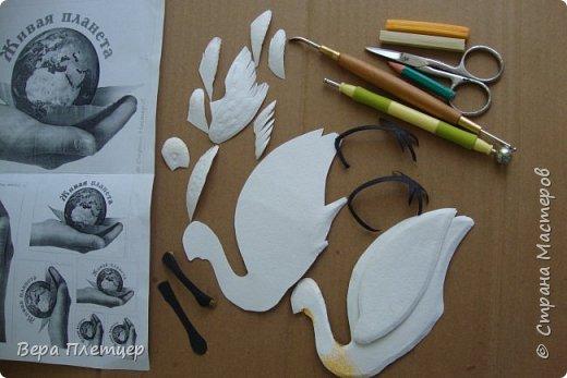 Колпица – это крупная (до 1 м высотой, весом около 2 кг) белая птица с заметно расширяющимся на конце жёлтым клювом. Этот удивительный клюв не похож ни на клюв ибиса, ни ка клюв аиста, ни на клюв цапли. Больше всего он напоминает щипцы для сахара. В остальном колпица похожа на ибиса. На голове у неё расположен белый или желтоватый хохолок из перьев. Шея у колпицы длинная, длинные и её ноги. Кстати, ноги у колпицы чёрные, у некоторых видов (например, у розовой колпицы) — красные. На лапах заметны перепонки для плавания. Несмотря на свою экзотичность, она весьма комфортно чувствует себя даже в умеренном климате. Схожесть во внешнем виде с аистом у колпицы неспроста: эта птица относится к отряду Аистообразные.  В мире существует всего лишь шесть видов этих прекрасных птиц. Летит колпица, вытянув ноги и немного прогнув достаточно длинную шею. Иногда при полёте птица парит.  фото 3