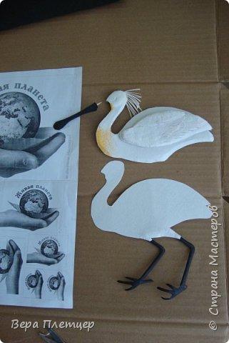Колпица – это крупная (до 1 м высотой, весом около 2 кг) белая птица с заметно расширяющимся на конце жёлтым клювом. Этот удивительный клюв не похож ни на клюв ибиса, ни ка клюв аиста, ни на клюв цапли. Больше всего он напоминает щипцы для сахара. В остальном колпица похожа на ибиса. На голове у неё расположен белый или желтоватый хохолок из перьев. Шея у колпицы длинная, длинные и её ноги. Кстати, ноги у колпицы чёрные, у некоторых видов (например, у розовой колпицы) — красные. На лапах заметны перепонки для плавания. Несмотря на свою экзотичность, она весьма комфортно чувствует себя даже в умеренном климате. Схожесть во внешнем виде с аистом у колпицы неспроста: эта птица относится к отряду Аистообразные.  В мире существует всего лишь шесть видов этих прекрасных птиц. Летит колпица, вытянув ноги и немного прогнув достаточно длинную шею. Иногда при полёте птица парит.  фото 6