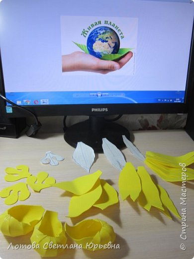 Венерин башмачок настоящий -растение, внесенное в Красную книгу Чувашии, произрастает в тенистых смешанных лесах и на лужайках. У этой орхидеи ярко-желтая губа и темно-пурпурные лепестки, а форма цветка напоминает изящную женскую туфельку. Яркая окраска и эффектная форма орхидеи напоминают крылья бабочек! фото 4