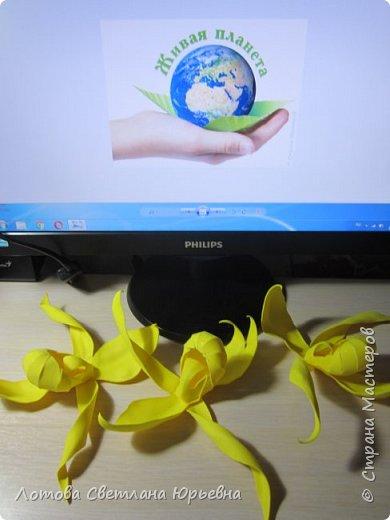 Венерин башмачок настоящий -растение, внесенное в Красную книгу Чувашии, произрастает в тенистых смешанных лесах и на лужайках. У этой орхидеи ярко-желтая губа и темно-пурпурные лепестки, а форма цветка напоминает изящную женскую туфельку. Яркая окраска и эффектная форма орхидеи напоминают крылья бабочек! фото 5