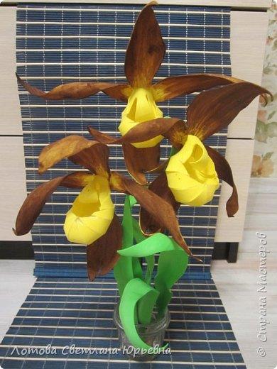 Венерин башмачок настоящий -растение, внесенное в Красную книгу Чувашии, произрастает в тенистых смешанных лесах и на лужайках. У этой орхидеи ярко-желтая губа и темно-пурпурные лепестки, а форма цветка напоминает изящную женскую туфельку. Яркая окраска и эффектная форма орхидеи напоминают крылья бабочек! фото 7