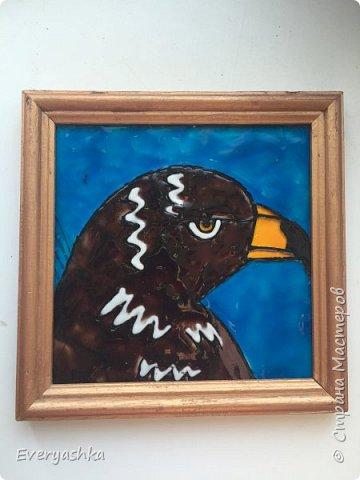 Степной орёл фото 1