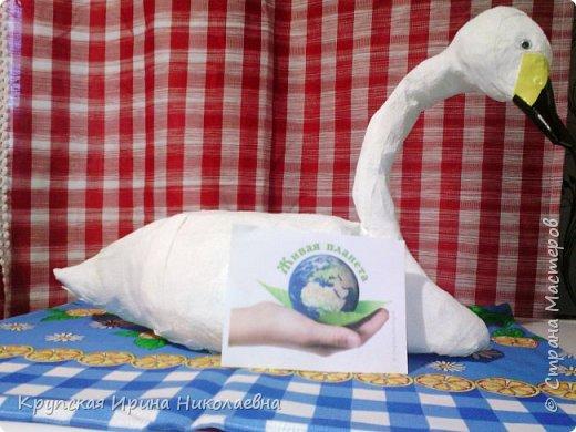 Лебедь - кликун фото 6