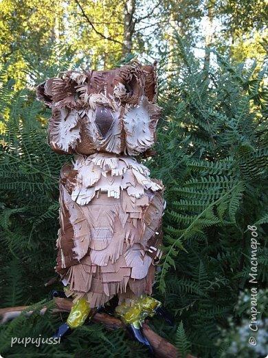 """Вот такая птичка получилась... Филин(лат.Bubo bubo)- хищная птица из семейства совиных,самый крупный представитель.Тело сложение """"бочкообразное"""".Ярко-оранжевые глаза и пучки удлинение перьев над ними.Масса более 4 кг,размах крыльев-до 2 метров.Охотится на зайцев,грызунов,ежкй,ворон,водоплавающих и др.птиц. ФИЛИН - ОЧЕНЬ ПОЛЕЗНАЯ ПТИЦА.Уничтожает множество грызунов. Сейчас филин нуждается в охране и внесен в Красные книги многих стран.Причина этого-отлов птиц,вырубка лесов... фото 1"""