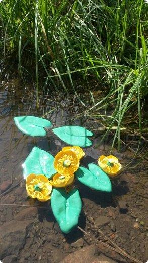 """Добрый день всем! Мы с удовольствием участвуем в этом конкурсе. Для работы выбрали тему """"Царство растений"""" и попытались изобразить часть водоёма, где растёт жёлтая кубышка. Кубышка жёлтая имеет народные названия: жёлтая кувшинка, одолень, вахта речная, вахта лесная, маковки водяные, мор куриный, мак жёлтый водяной,балаболка, бубенчики жёлтые, водолёт, вахтовик жёлтый, горляшное семя, лопух водяной, пуговка ...( lilitochka.ru ) Кубышка жёлтая - удивительной красоты растение. Своё русское название оно получило из-за схожести созревшего плода со старинным сосудом с крышечкой, которым пользовались на Руси. Это многолетний представитель водной флоры. Кубышка жёлтая распространена во многих регионах России, кроме областей Дальнего Востока и Крайнего Севера. Места её произрастания - заливы,озёра,пруды, речные тихие мелководья. Корневище растения очень ветвистое, от него расползаются десятки корней по дну водоёма. Диаметр зависит от возраста кубышки - корень взрослого растения может достигать 10 см в толщину. Стебель кубышки жёлтой практически полностью скрыт под водой, на поверхности остаётся лишь небольшая часть с цветком. Он упругий и длинный,порой достигает 2-3 метра. Мясистые крупные листья лежат на воде. Они ярко зелёного цвета,блестят на солнце, но есть и мелкие и тонкие подводные листья , часто свёрнутые и образующие подобие колпачка. Цветы кубышки жёлтые. Его """"лепестки"""" являются чашелистиками. Они окружают цветок и защищают его. В плохую погоду и в ночное время они закрыты. Большая часть цветка - тычинки с пыльниками. В центре расположена многозвеньевая завязь, в которой образуется плод растения.плод напоминает кувшин,в котором спрятаны семена. Период цветения - с мая по август. ( w w w/ anapacity. com./krasnya - kniga - Krasnodarckogo - kraya - rasteniya/ kybyshka - zheltaya.html) фото 1"""