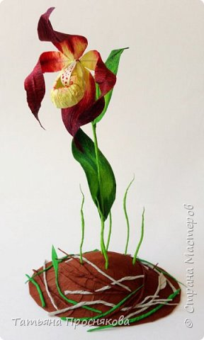 Редко кого может отставить равнодушным это удивительное растение. Хочу и я показать свой вариант этой дикой орхидеи - венериного башмачка. Их несколько разновидностей, но именно этот, венерин башмачок настоящий, с золотой сверкающей туфелькой в центре, привлёк моё внимание. фото 24