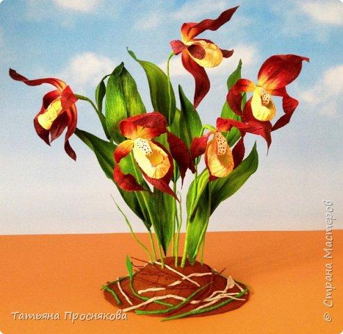 Редко кого может отставить равнодушным это удивительное растение. Хочу и я показать свой вариант этой дикой орхидеи - венериного башмачка. Их несколько разновидностей, но именно этот, венерин башмачок настоящий, с золотой сверкающей туфелькой в центре, привлёк моё внимание. фото 25
