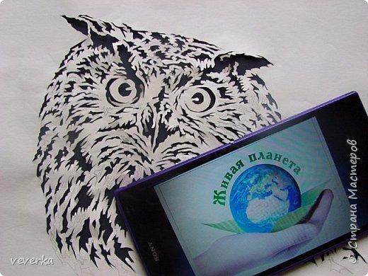 Филин нарисован простым карандашом на бумаге и вырезан. Затем лист с картинкой был наложен на темный фон и вставлен в рамку. фото 3
