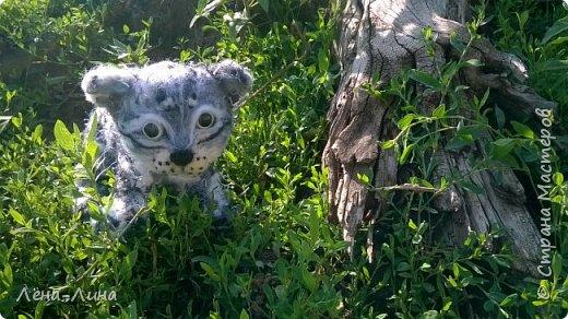 Снежный барс, или ирбис (Uncia uncia, или Panthera uncia) – единственный вид крупных кошек, приспособившийся обитать в суровых условиях высокогорий. Снежный барс – вид, изученный крайне недостаточно и долгое время остававшийся загадкой для исследователей. Мало кому удается увидеть ирбиса в дикой природе, гораздо чаще о его незримом присутствии в горах говорят следы жизнедеятельности этого осторожного хищника. В России снежный барс обитает на северном пределе современного ареала и образует всего лишь несколько устойчивых группировок в оптимальных местообитаниях – в горах Алтае-Саянского экорегиона. Численность ирбиса в России составляет всего лишь 1-2% от общей численности вида. Несколько лет назад удалось уточнить распространение и численность ключевых группировок ирбиса в России, обитающих в республиках Алтай, Тыва и в южной части Красноярского края. Ирбис для многих азиатских народов – символ силы, благородства и власти. Перечитав массу информации об этом исчезающем представителе семейства кошачьих, решила сделать этакого котенка-несмышленыша, которому еще только предстоит вырасти в большого, сильного и красивого зверя. фото 11