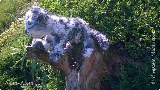 Снежный барс, или ирбис (Uncia uncia, или Panthera uncia) – единственный вид крупных кошек, приспособившийся обитать в суровых условиях высокогорий. Снежный барс – вид, изученный крайне недостаточно и долгое время остававшийся загадкой для исследователей. Мало кому удается увидеть ирбиса в дикой природе, гораздо чаще о его незримом присутствии в горах говорят следы жизнедеятельности этого осторожного хищника. В России снежный барс обитает на северном пределе современного ареала и образует всего лишь несколько устойчивых группировок в оптимальных местообитаниях – в горах Алтае-Саянского экорегиона. Численность ирбиса в России составляет всего лишь 1-2% от общей численности вида. Несколько лет назад удалось уточнить распространение и численность ключевых группировок ирбиса в России, обитающих в республиках Алтай, Тыва и в южной части Красноярского края. Ирбис для многих азиатских народов – символ силы, благородства и власти. Перечитав массу информации об этом исчезающем представителе семейства кошачьих, решила сделать этакого котенка-несмышленыша, которому еще только предстоит вырасти в большого, сильного и красивого зверя. фото 10