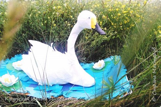 Лебедь - кликун фото 1