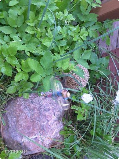 Мне очень нравятся стрекоза. Они похожи на маленькие вертолётики. Вот моя стрекоза в полете. фото 13