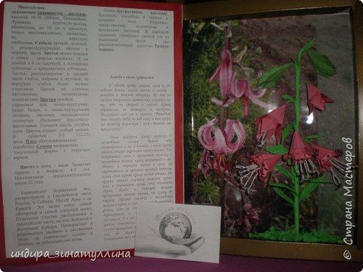 открываем красную книгу фото 2