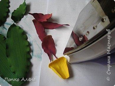 Самая красивая из белорусских орхидей очень привередлива. Венерин башмачок не выносит яркого освещения, любит тень, а почва растению нужна влажная, с определенным видом грибка.    Первый лист орхидеи появляется только на 4-й год, а сам красивый цветок еще позже. Наиболее яркими и красивыми цветки бывают на неопыленных растениях. В Беларуси произрастает 35 видов орхидных, но самым красивым является Венерин башмачок, который имеет желтые, фиолетово-розовые, буро-красные яркие цветы. Венерин башмачок, как и все орхидные, является так называемым насекомоядным растением.    Читать полностью: http://www.interfax.by/article/104032   фото 6