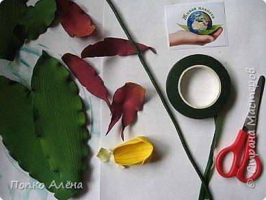 Самая красивая из белорусских орхидей очень привередлива. Венерин башмачок не выносит яркого освещения, любит тень, а почва растению нужна влажная, с определенным видом грибка.    Первый лист орхидеи появляется только на 4-й год, а сам красивый цветок еще позже. Наиболее яркими и красивыми цветки бывают на неопыленных растениях. В Беларуси произрастает 35 видов орхидных, но самым красивым является Венерин башмачок, который имеет желтые, фиолетово-розовые, буро-красные яркие цветы. Венерин башмачок, как и все орхидные, является так называемым насекомоядным растением.    Читать полностью: http://www.interfax.by/article/104032   фото 7