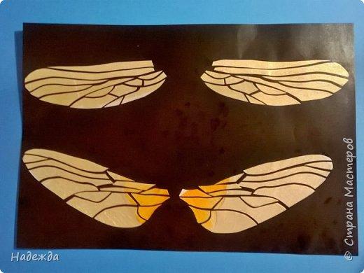 Стрекоза шафрановая фото 7
