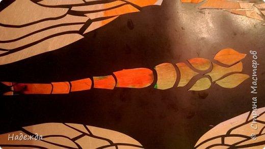 Стрекоза шафрановая фото 8