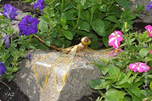 Здравствуйте, жители Страны Мастеров! На конкурс я решила сделать шафрановую стрекозу, т.к. сейчас лето, у нас летает много стрекоз, в т.ч. похожих на эту. Шафрановая стрекоза - это очень интересный вид рода Sympetrum. До недавнего времени вид считался распространенным лишь в Японии, Приморье и Юго-Восточном Китае, однако, за последнее десятилетие обнаружен в Верхнем Приамурье, а две его популяции были найдены в Новосибирской области и в Западной Сибири - на Алтае (Манжерокское озеро).  фото 13
