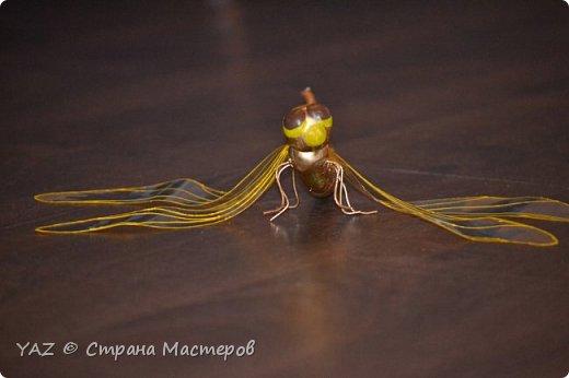 Здравствуйте, жители Страны Мастеров! На конкурс я решила сделать шафрановую стрекозу, т.к. сейчас лето, у нас летает много стрекоз, в т.ч. похожих на эту. Шафрановая стрекоза - это очень интересный вид рода Sympetrum. До недавнего времени вид считался распространенным лишь в Японии, Приморье и Юго-Восточном Китае, однако, за последнее десятилетие обнаружен в Верхнем Приамурье, а две его популяции были найдены в Новосибирской области и в Западной Сибири - на Алтае (Манжерокское озеро).  фото 12