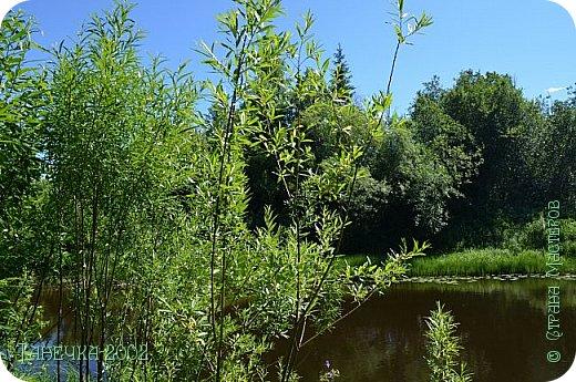 Водяная лилия (кувшинка, Nymphaeáceae) - многолетнее травянистое водное растение, принадлежащее к классу кувшинковых, или нимфейных. Занесена в Красную Книгу Республики Коми.Темно-бурое толстое корневище (до 2,5 м в высоту) покрыто небольшим количеством черешков листьев. За счет целой системы воздухоносных каналов обеспечивается дыхание растения и удержание на поверхности при сильных ветрах.  Листья плавающие, округлой формы, диаметром до 30 см, меняют цвет с возрастом, от красноватого до темно-зеленого и красновато-фиолетового. Одиночные крупные цветки белого цвета, в диаметре до 20 см. Чашечка, состоящая из 3-5 лепестков, обладает сильным нежным запахом. Цветет в течение всего лета. Плоды зеленого цвета, шарообразной формы, созревают под водой.(Красная Книга РеспубликиКоми) фото 14