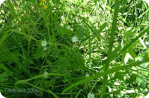 Водяная лилия (кувшинка, Nymphaeáceae) - многолетнее травянистое водное растение, принадлежащее к классу кувшинковых, или нимфейных. Занесена в Красную Книгу Республики Коми.Темно-бурое толстое корневище (до 2,5 м в высоту) покрыто небольшим количеством черешков листьев. За счет целой системы воздухоносных каналов обеспечивается дыхание растения и удержание на поверхности при сильных ветрах.  Листья плавающие, округлой формы, диаметром до 30 см, меняют цвет с возрастом, от красноватого до темно-зеленого и красновато-фиолетового. Одиночные крупные цветки белого цвета, в диаметре до 20 см. Чашечка, состоящая из 3-5 лепестков, обладает сильным нежным запахом. Цветет в течение всего лета. Плоды зеленого цвета, шарообразной формы, созревают под водой.(Красная Книга РеспубликиКоми) фото 17