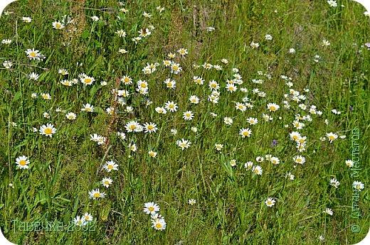 Водяная лилия (кувшинка, Nymphaeáceae) - многолетнее травянистое водное растение, принадлежащее к классу кувшинковых, или нимфейных. Занесена в Красную Книгу Республики Коми.Темно-бурое толстое корневище (до 2,5 м в высоту) покрыто небольшим количеством черешков листьев. За счет целой системы воздухоносных каналов обеспечивается дыхание растения и удержание на поверхности при сильных ветрах.  Листья плавающие, округлой формы, диаметром до 30 см, меняют цвет с возрастом, от красноватого до темно-зеленого и красновато-фиолетового. Одиночные крупные цветки белого цвета, в диаметре до 20 см. Чашечка, состоящая из 3-5 лепестков, обладает сильным нежным запахом. Цветет в течение всего лета. Плоды зеленого цвета, шарообразной формы, созревают под водой.(Красная Книга РеспубликиКоми) фото 19