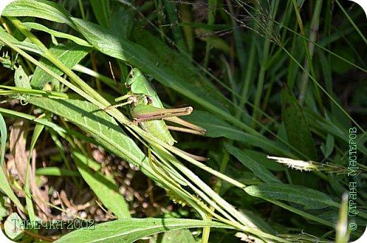 Водяная лилия (кувшинка, Nymphaeáceae) - многолетнее травянистое водное растение, принадлежащее к классу кувшинковых, или нимфейных. Занесена в Красную Книгу Республики Коми.Темно-бурое толстое корневище (до 2,5 м в высоту) покрыто небольшим количеством черешков листьев. За счет целой системы воздухоносных каналов обеспечивается дыхание растения и удержание на поверхности при сильных ветрах.  Листья плавающие, округлой формы, диаметром до 30 см, меняют цвет с возрастом, от красноватого до темно-зеленого и красновато-фиолетового. Одиночные крупные цветки белого цвета, в диаметре до 20 см. Чашечка, состоящая из 3-5 лепестков, обладает сильным нежным запахом. Цветет в течение всего лета. Плоды зеленого цвета, шарообразной формы, созревают под водой.(Красная Книга РеспубликиКоми) фото 25
