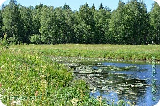 Водяная лилия (кувшинка, Nymphaeáceae) - многолетнее травянистое водное растение, принадлежащее к классу кувшинковых, или нимфейных. Занесена в Красную Книгу Республики Коми.Темно-бурое толстое корневище (до 2,5 м в высоту) покрыто небольшим количеством черешков листьев. За счет целой системы воздухоносных каналов обеспечивается дыхание растения и удержание на поверхности при сильных ветрах.  Листья плавающие, округлой формы, диаметром до 30 см, меняют цвет с возрастом, от красноватого до темно-зеленого и красновато-фиолетового. Одиночные крупные цветки белого цвета, в диаметре до 20 см. Чашечка, состоящая из 3-5 лепестков, обладает сильным нежным запахом. Цветет в течение всего лета. Плоды зеленого цвета, шарообразной формы, созревают под водой.(Красная Книга РеспубликиКоми) фото 11