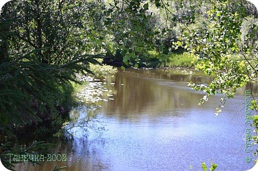 Водяная лилия (кувшинка, Nymphaeáceae) - многолетнее травянистое водное растение, принадлежащее к классу кувшинковых, или нимфейных. Занесена в Красную Книгу Республики Коми.Темно-бурое толстое корневище (до 2,5 м в высоту) покрыто небольшим количеством черешков листьев. За счет целой системы воздухоносных каналов обеспечивается дыхание растения и удержание на поверхности при сильных ветрах.  Листья плавающие, округлой формы, диаметром до 30 см, меняют цвет с возрастом, от красноватого до темно-зеленого и красновато-фиолетового. Одиночные крупные цветки белого цвета, в диаметре до 20 см. Чашечка, состоящая из 3-5 лепестков, обладает сильным нежным запахом. Цветет в течение всего лета. Плоды зеленого цвета, шарообразной формы, созревают под водой.(Красная Книга РеспубликиКоми) фото 24