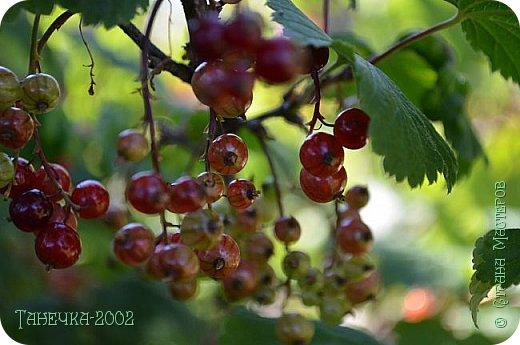 Водяная лилия (кувшинка, Nymphaeáceae) - многолетнее травянистое водное растение, принадлежащее к классу кувшинковых, или нимфейных. Занесена в Красную Книгу Республики Коми.Темно-бурое толстое корневище (до 2,5 м в высоту) покрыто небольшим количеством черешков листьев. За счет целой системы воздухоносных каналов обеспечивается дыхание растения и удержание на поверхности при сильных ветрах.  Листья плавающие, округлой формы, диаметром до 30 см, меняют цвет с возрастом, от красноватого до темно-зеленого и красновато-фиолетового. Одиночные крупные цветки белого цвета, в диаметре до 20 см. Чашечка, состоящая из 3-5 лепестков, обладает сильным нежным запахом. Цветет в течение всего лета. Плоды зеленого цвета, шарообразной формы, созревают под водой.(Красная Книга РеспубликиКоми) фото 15