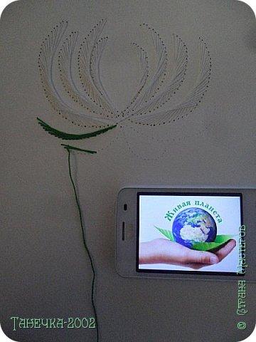 Водяная лилия (кувшинка, Nymphaeáceae) - многолетнее травянистое водное растение, принадлежащее к классу кувшинковых, или нимфейных. Занесена в Красную Книгу Республики Коми.Темно-бурое толстое корневище (до 2,5 м в высоту) покрыто небольшим количеством черешков листьев. За счет целой системы воздухоносных каналов обеспечивается дыхание растения и удержание на поверхности при сильных ветрах.  Листья плавающие, округлой формы, диаметром до 30 см, меняют цвет с возрастом, от красноватого до темно-зеленого и красновато-фиолетового. Одиночные крупные цветки белого цвета, в диаметре до 20 см. Чашечка, состоящая из 3-5 лепестков, обладает сильным нежным запахом. Цветет в течение всего лета. Плоды зеленого цвета, шарообразной формы, созревают под водой.(Красная Книга РеспубликиКоми) фото 5