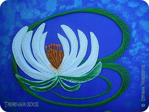 Водяная лилия (кувшинка, Nymphaeáceae) - многолетнее травянистое водное растение, принадлежащее к классу кувшинковых, или нимфейных. Занесена в Красную Книгу Республики Коми.Темно-бурое толстое корневище (до 2,5 м в высоту) покрыто небольшим количеством черешков листьев. За счет целой системы воздухоносных каналов обеспечивается дыхание растения и удержание на поверхности при сильных ветрах.  Листья плавающие, округлой формы, диаметром до 30 см, меняют цвет с возрастом, от красноватого до темно-зеленого и красновато-фиолетового. Одиночные крупные цветки белого цвета, в диаметре до 20 см. Чашечка, состоящая из 3-5 лепестков, обладает сильным нежным запахом. Цветет в течение всего лета. Плоды зеленого цвета, шарообразной формы, созревают под водой.(Красная Книга РеспубликиКоми) фото 1