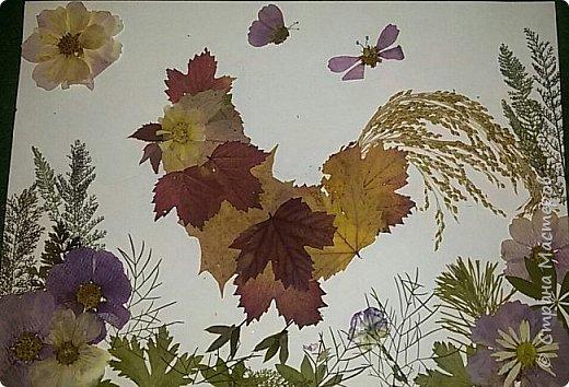 """Накопились у меня сухие цветы и листочки. Как всегда-заготавливала """"на всякий случай"""". И в этот раз решила-а почему бы и нет?:)) Кстати, если это делать с детьми-это не только интересно и увлекательно складывать фигурки и картинки,развивать фантазию,но и познавательно - можно изучить и растения, и цвета.  фото 1"""