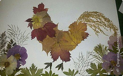 """Накопились у меня сухие цветы и листочки. Как всегда-заготавливала """"на всякий случай"""". И в этот раз решила-а почему бы и нет?:)) Кстати, если это делать с детьми-это не только интересно и увлекательно складывать фигурки и картинки,развивать фантазию,но и познавательно - можно изучить и растения, и цвета.  фото 8"""