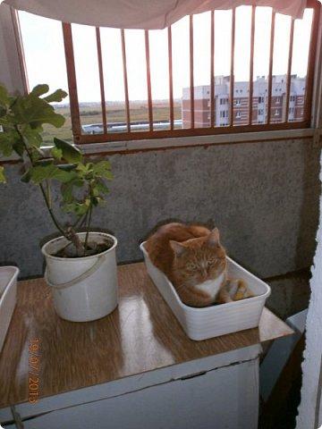 Панно из соломки домашнего любимца. фото 2