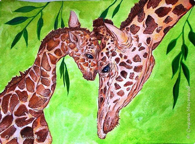 """Моё любимое животное это жирафы.  Они очень красивые, грациозные смешные и милые. Откуда берутся жирафы? Почти с двухметровой высоты. Пятнадцать месяцев мама-жираф вынашивает своего ребенка, а затем - роды, и единственный детеныш жирафа, весящий около 60 кг, падает на землю с двухметровой высоты. Во всем есть своя польза: при таком """"ошеломительном"""" рождении легко разрывается пуповина.   фото 1"""