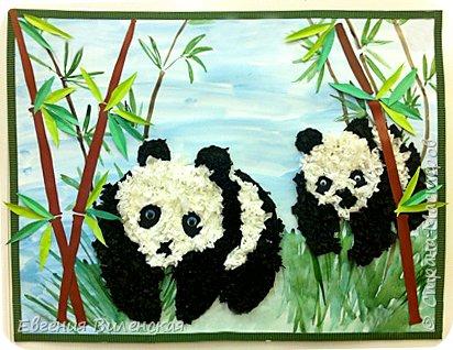 Мы рады приветствовать всех жителей Станы мастеров. Хотим показать вам нашу конкурсную работу. Она посвящена Большой  Панде, самому редкому виду медведей, которые обитают в горных районах центрального Китая. Не смотря на свой внушительный вес (от 100 до 150 кг),  детеныш панды появляется совсем крошечным, длиной всего 15 см.Медвежата рождаются совсем беспомощные и начинают ползать лишь в возрасте 10 недель, а после 21 недели уже начинают уверенно передвигаться. Мама кормит малыша молоком до 7-9 месяцев , именно в этом возрасте он начинает есть бамбук.Интересно было узнать, что взрослые панды съедают от 13 до 37 кг бамбука за день!!! Вот это обжоры))) При подготовке к конкурсу мы с ребятами узнали много новой информации про их любимых мишек. Не знаю почему, но когда я спросила у детей какое животное с детенышем они бы хотели сделать, большинство, особенно девочки, захотели делать панду.  фото 1