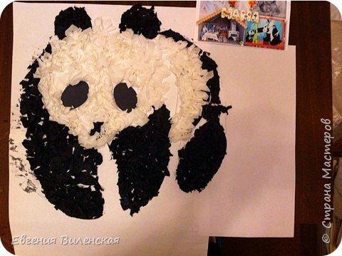 Мы рады приветствовать всех жителей Станы мастеров. Хотим показать вам нашу конкурсную работу. Она посвящена Большой  Панде, самому редкому виду медведей, которые обитают в горных районах центрального Китая. Не смотря на свой внушительный вес (от 100 до 150 кг),  детеныш панды появляется совсем крошечным, длиной всего 15 см.Медвежата рождаются совсем беспомощные и начинают ползать лишь в возрасте 10 недель, а после 21 недели уже начинают уверенно передвигаться. Мама кормит малыша молоком до 7-9 месяцев , именно в этом возрасте он начинает есть бамбук.Интересно было узнать, что взрослые панды съедают от 13 до 37 кг бамбука за день!!! Вот это обжоры))) При подготовке к конкурсу мы с ребятами узнали много новой информации про их любимых мишек. Не знаю почему, но когда я спросила у детей какое животное с детенышем они бы хотели сделать, большинство, особенно девочки, захотели делать панду.  фото 6