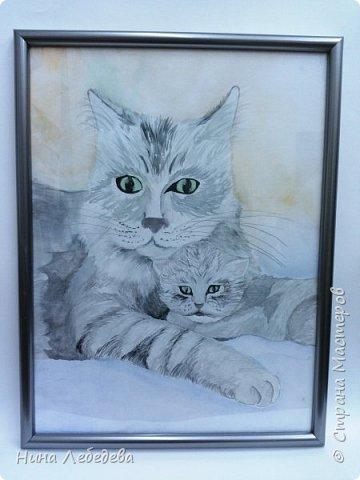 Кошачья забота фото 1