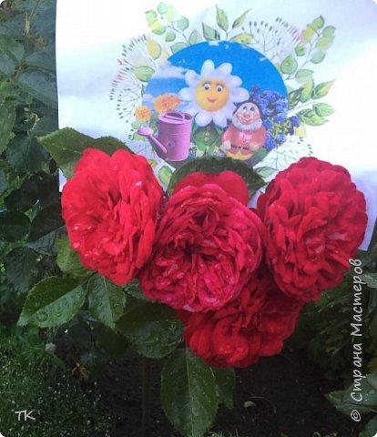 Сладкие розы для бабушки фото 4
