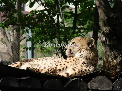 Весна в Московском зоопарке фото 3