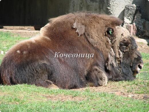 Весна в Московском зоопарке фото 2