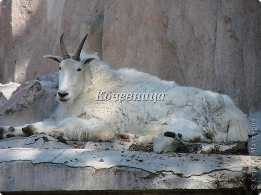 Весна в Московском зоопарке фото 4