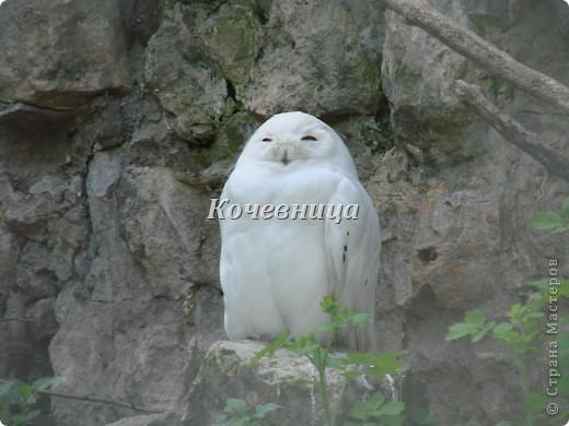 Весна в Московском зоопарке фото 6