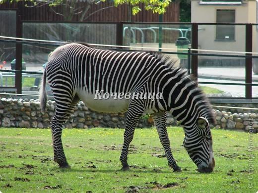Весна в Московском зоопарке фото 10